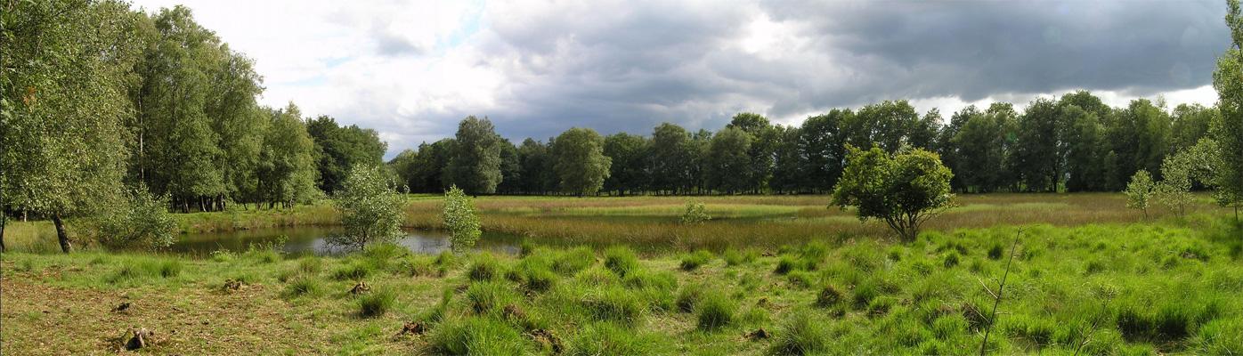 westerhaar-panorama-2-hoekakkersveentje-voetzoekers