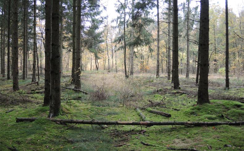 voetzoekers-boswachterij-gees-rode-route-bodem-bedekt-met-mos