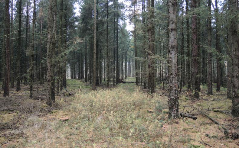voetzoekers-boswachterij-gees-rode-route-herfstkleuren