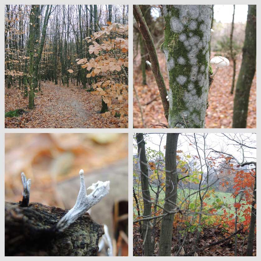 voetzoekers-boswachterij-gees-rode-route-impressie