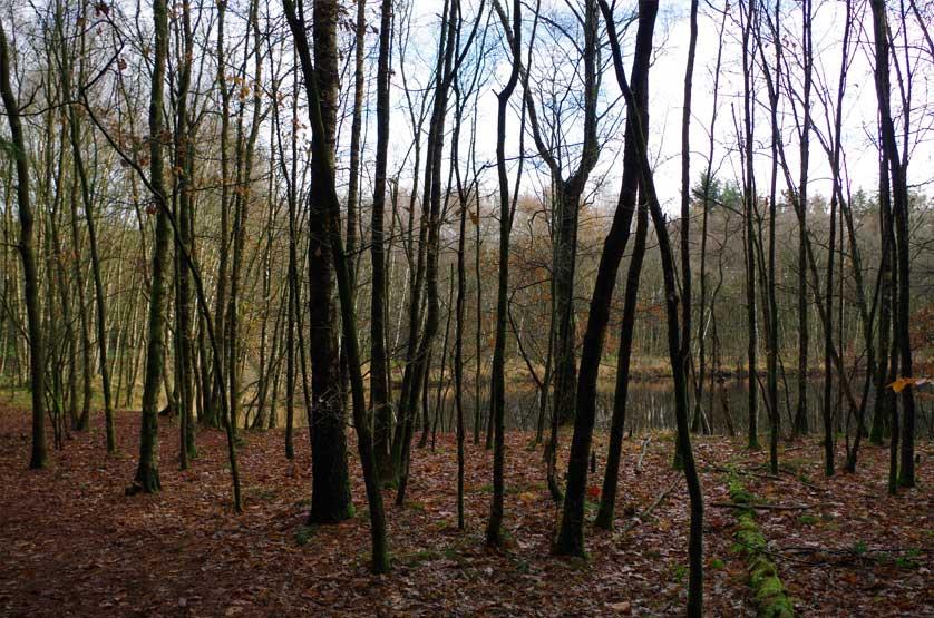 voetzoekers-boswachterij-gees-rode-route-licht-bos-2