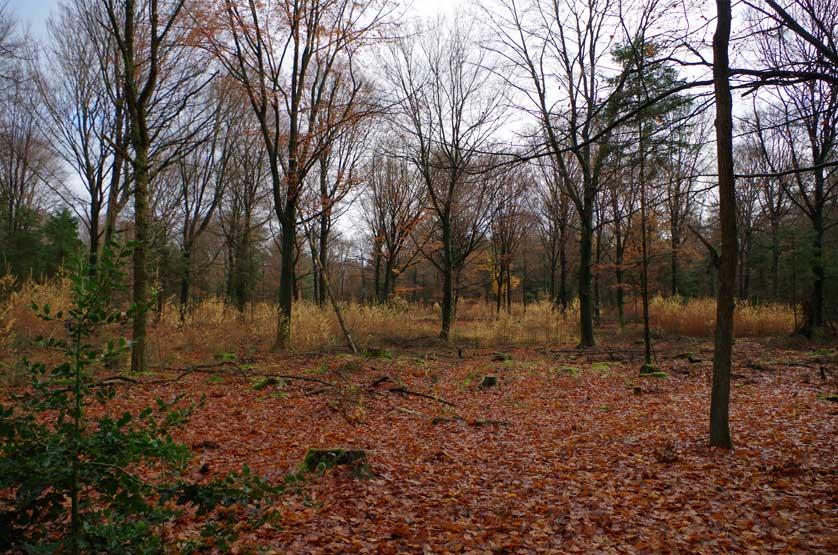 voetzoekers-boswachterij-gees-rode-route-oogstbos