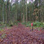 voetzoekers-boswachterij-gees-rode-route-top-afbeelding