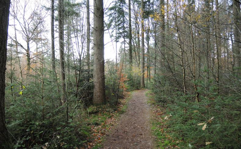 voetzoekers-boswachterij-gees-rode-route-wandelpad
