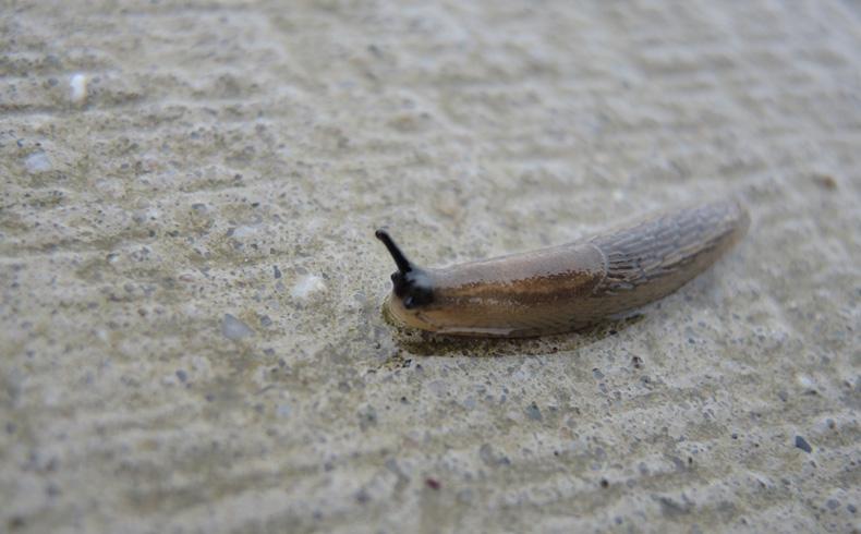 voetzoekers-familiepad-noordenveld-slak