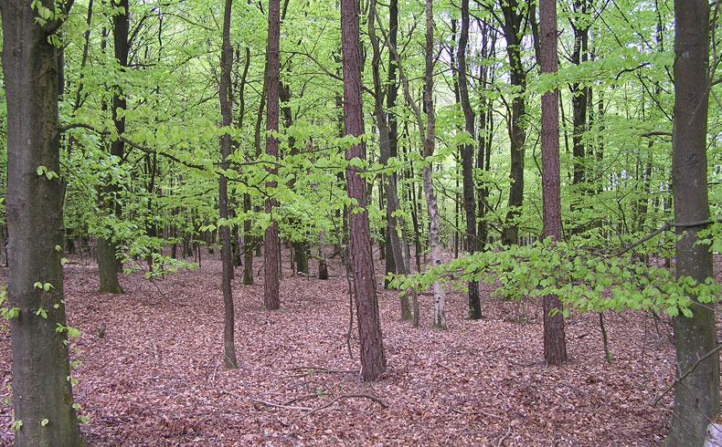 voetzoekers-hoekenbrinkwandeling-lente-groen