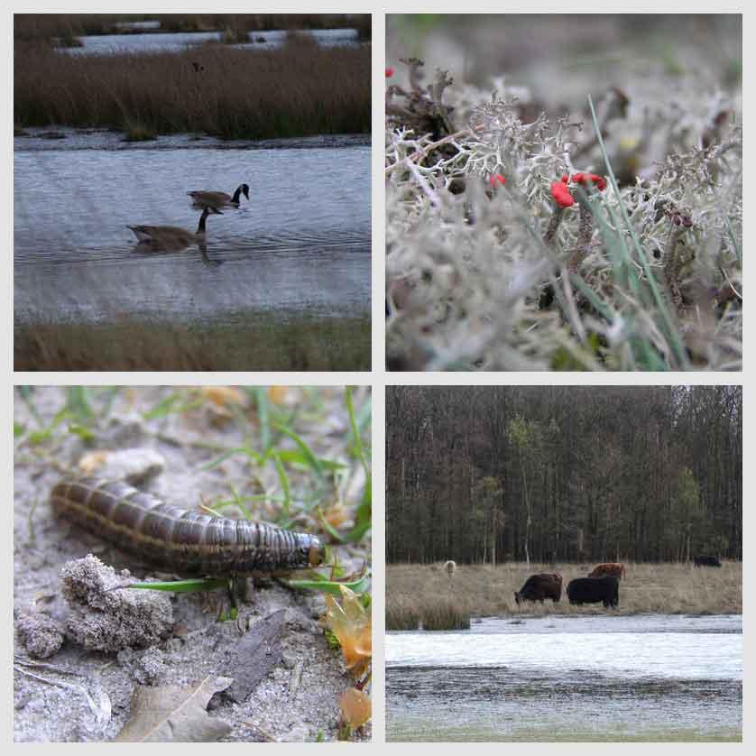 voetzoekers-hoekenbrinkwandeling-planten-en-dieren-1