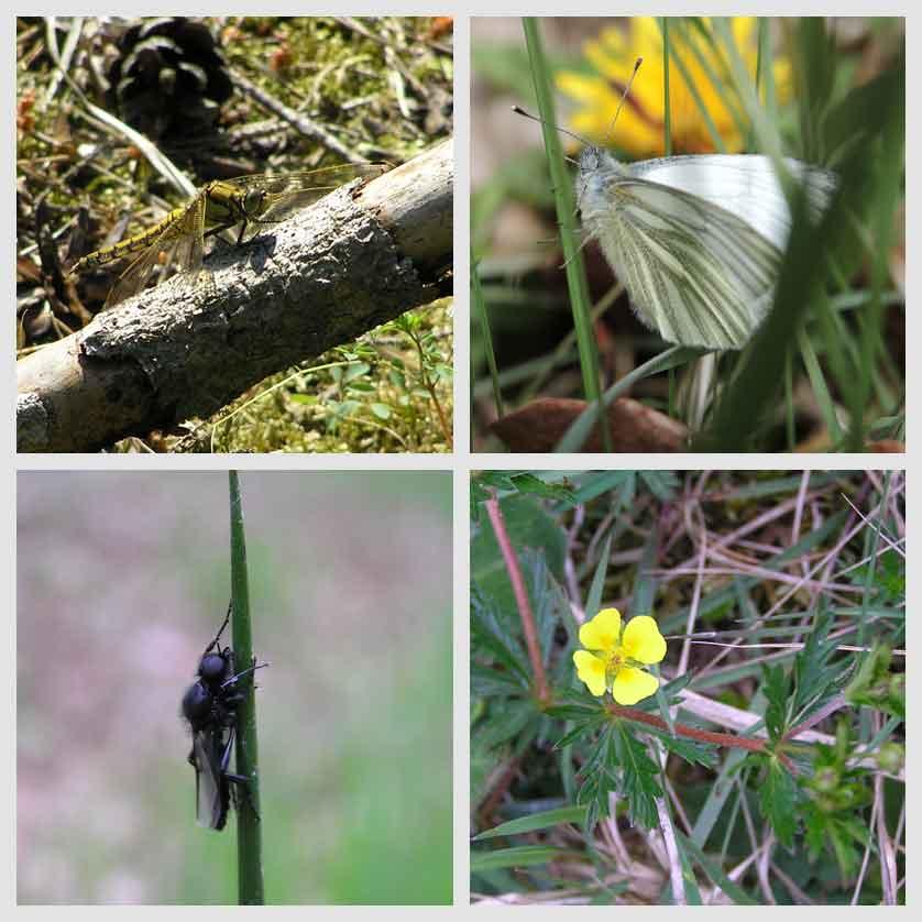 voetzoekers-hoekenbrinkwandeling-planten-en-dieren-2