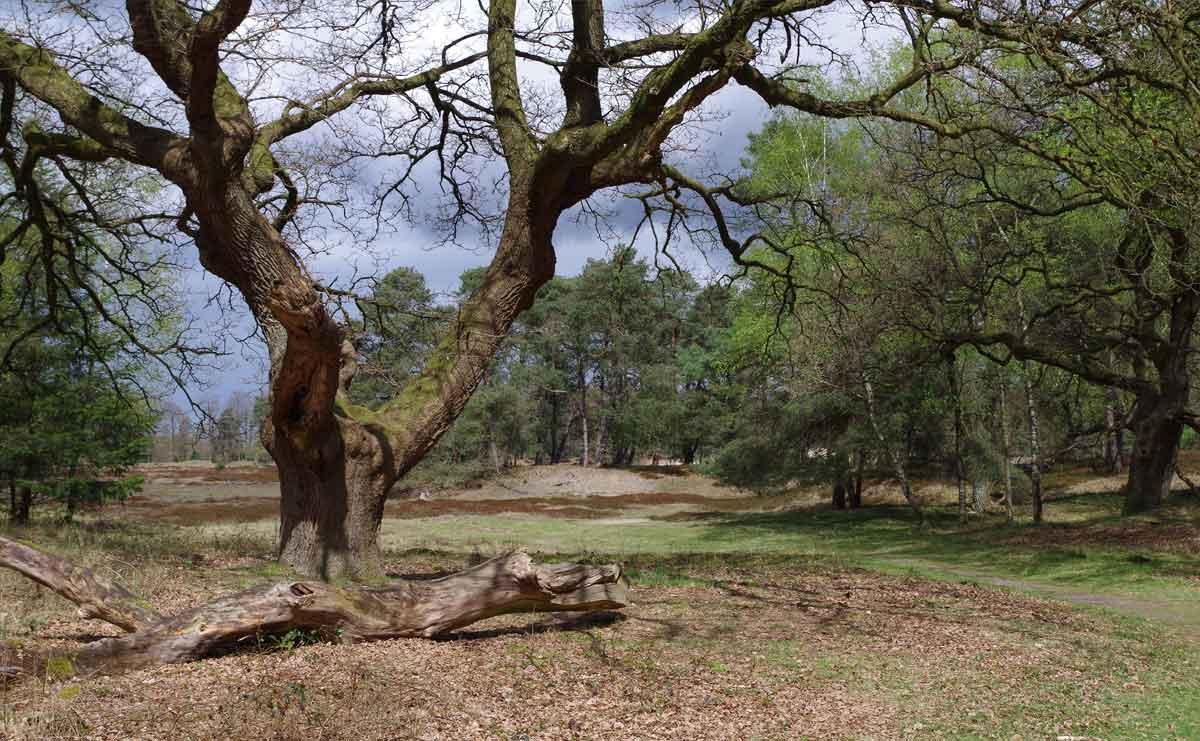 voetzoekers-hoekenbrinkwandeling-woudreus
