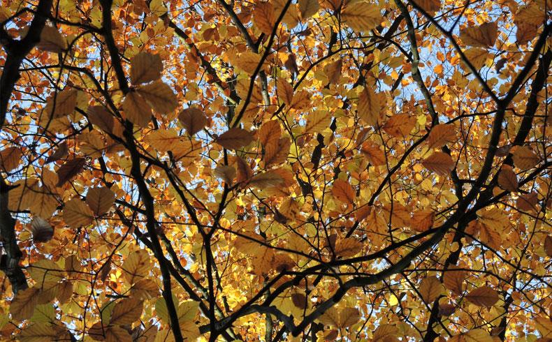 voetzoekers-noordsterwandeling-herfstkleuren