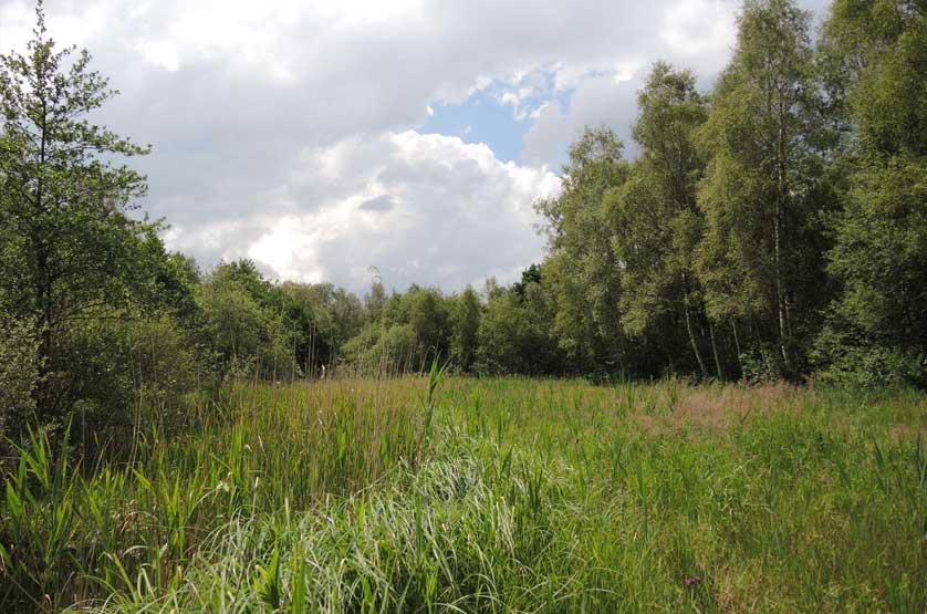voetzoekers-woldlakebos-rietkragen