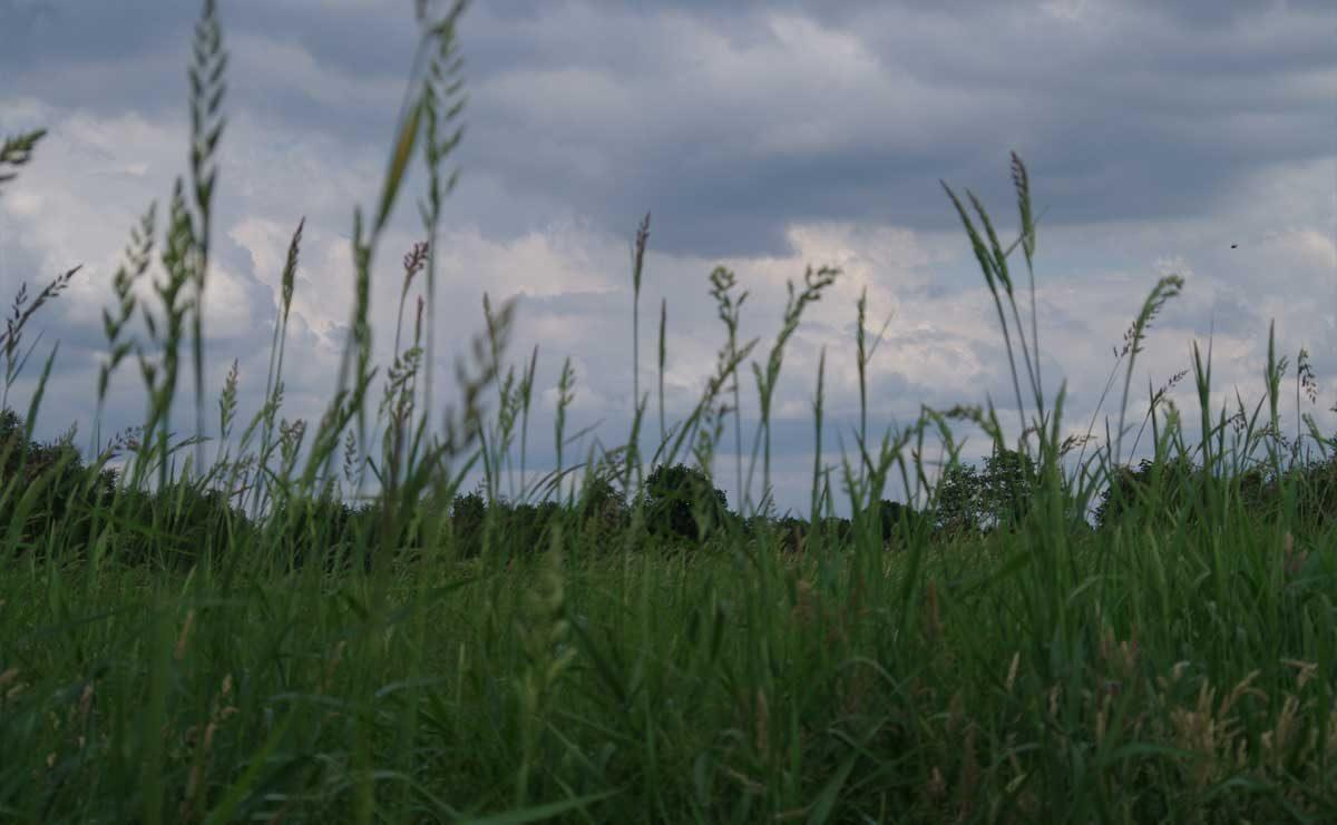 Woldlakebos