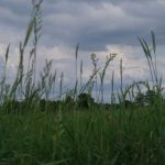 voetzoekers-woldlakebos-top-afbeelding