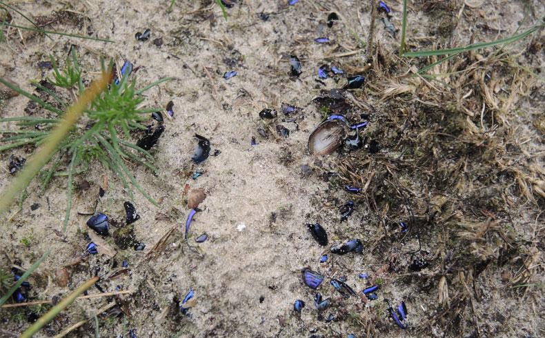 voetzoekers-aekingerzand-mestkevers