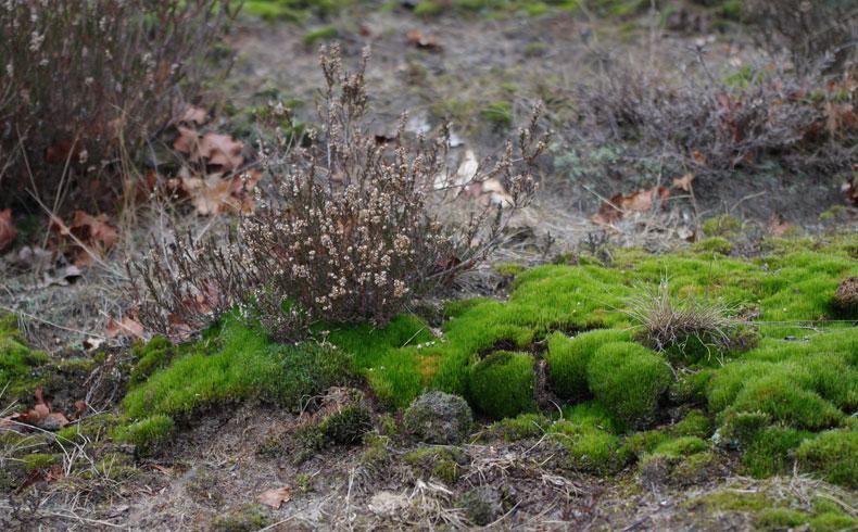 voetzoekers-aekingerzand-mini-landschap