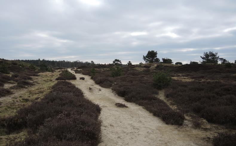 voetzoekers-aekingerzand-zand