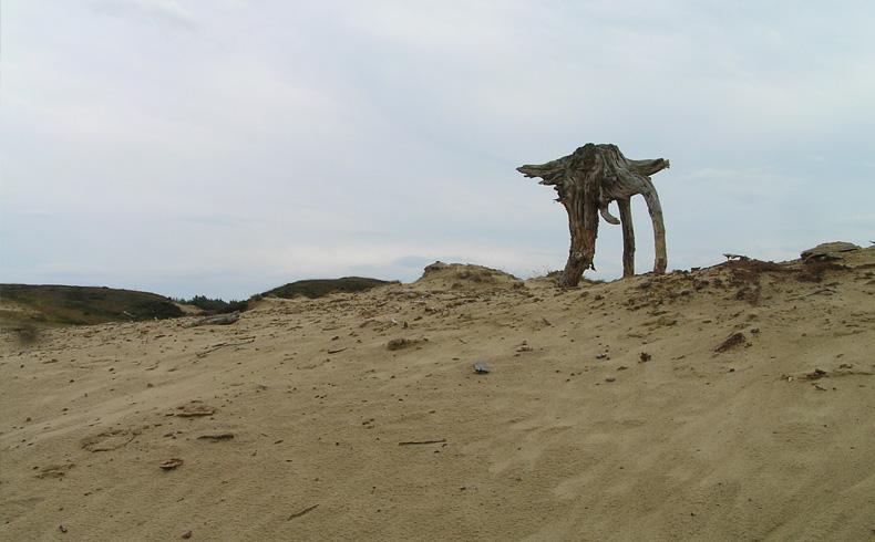 voetzoekers-aekingerzand-zandverstuiving