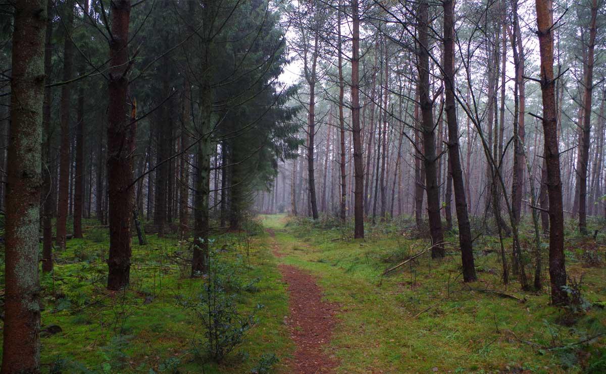 Landgoed-Boschoord-witte-route-bospad-voetzoekers