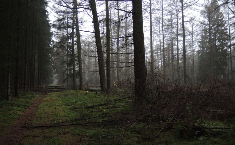 Landgoed-Boschoord-witte-route-boswerkzaamheden-voetzoekers