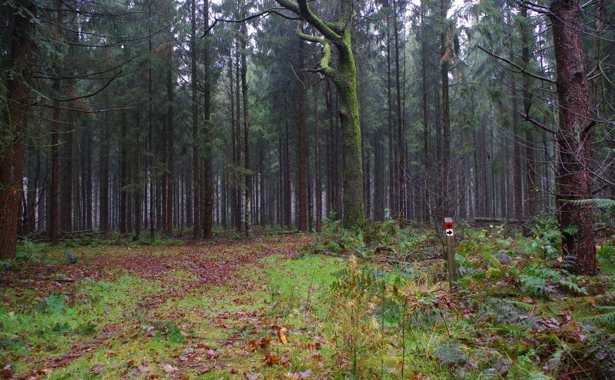Landgoed-Boschoord-witte-route-paaltjes-voetzoekers