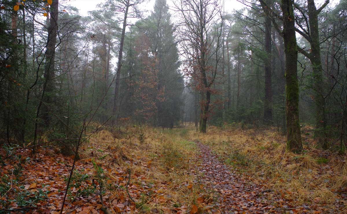 Landgoed-Boschoord-witte-route-start-route-voetzoekers