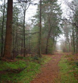 Landgoed-Boschoord-witte-route-voetzoekers