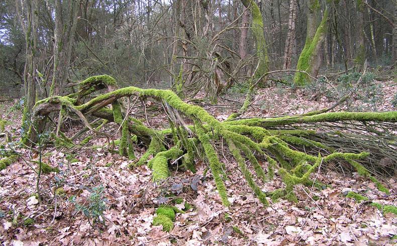 voetzoekers-De-Palms-dood-hout-leeft