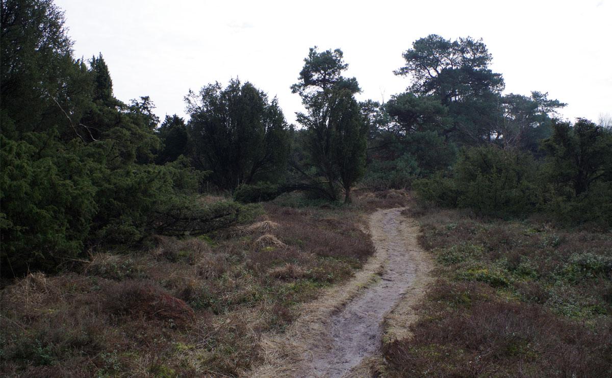 voetzoekers-De-Palms-tussen-de-jeneverbessen