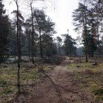 voetzoekers-boswachterij-ruinen-groene-route