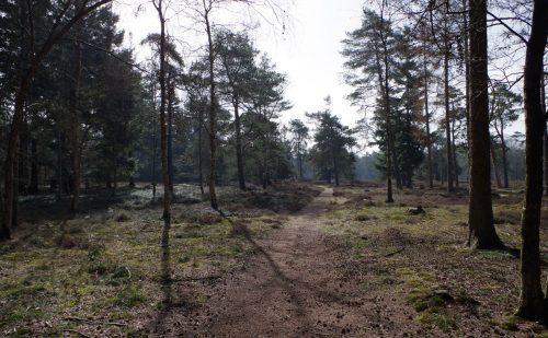 Ruinen – Groen