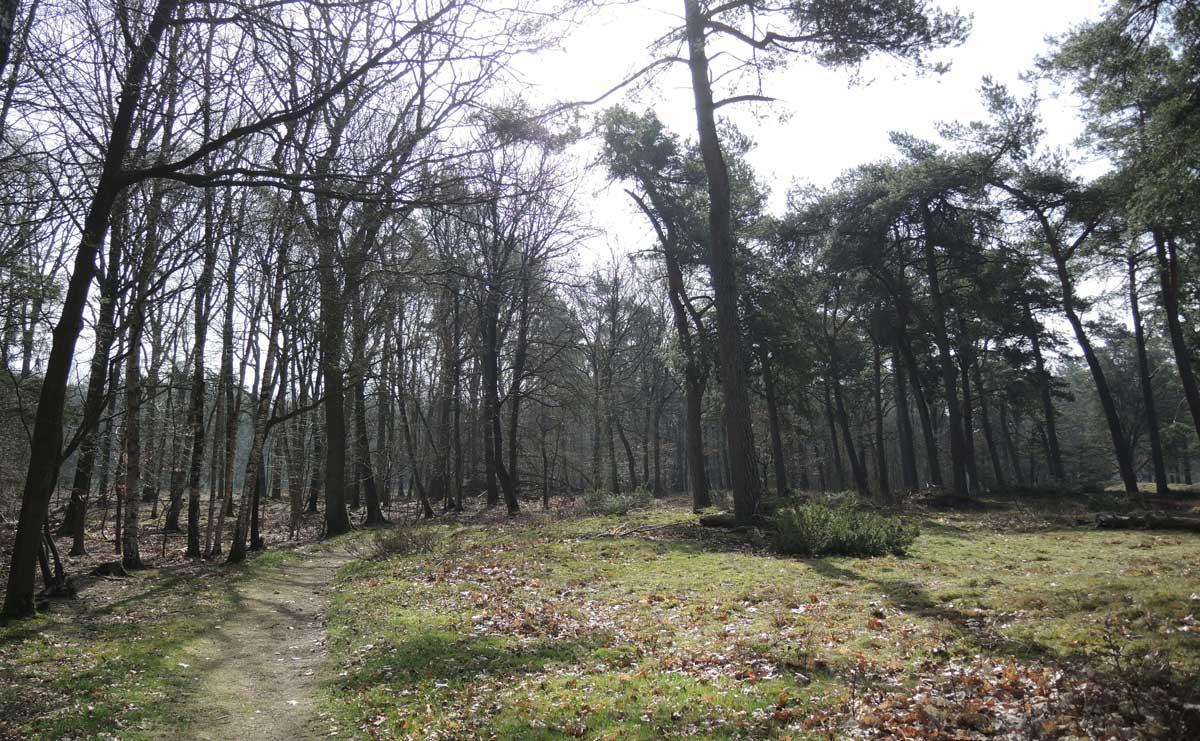 voetzoekers-boswachterij-ruinen-groene-route-echten
