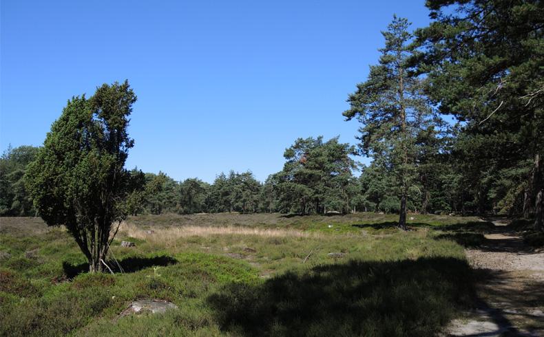 voetzoekers-boswachterij-ruinen-groene-route-heide-terrein