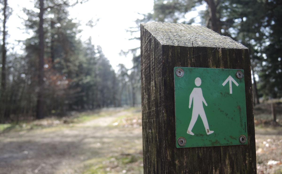 voetzoekers-boswachterij-ruinen-groene-route-paaltjes