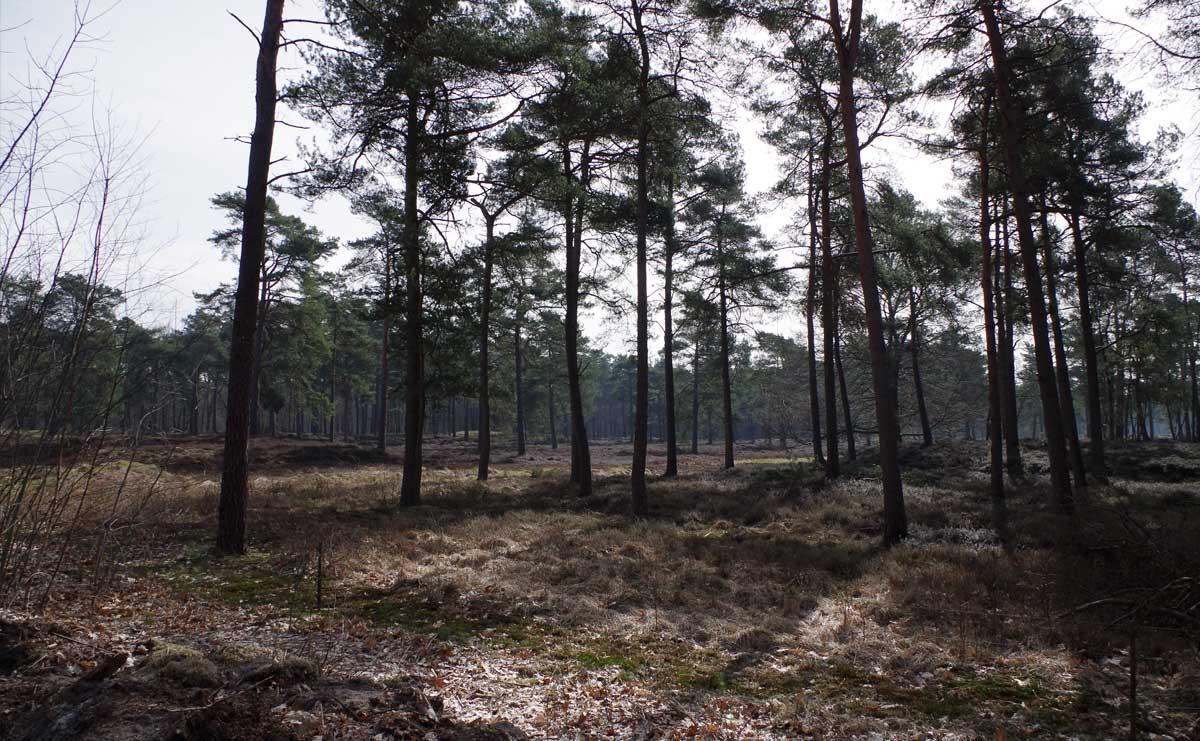 voetzoekers-boswachterij-ruinen-groene-route-start
