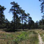 voetzoekers-boswachterij-ruinen-groene-route-uitgelicht