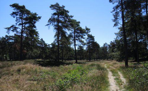 1.5 km – Ruinen – Groen