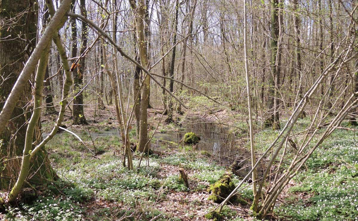 voetzoekers-de-kleibosch-kleidobben