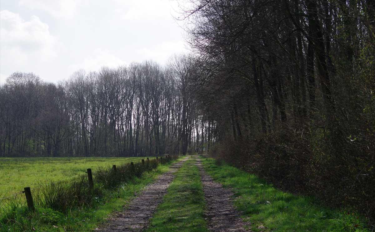 voetzoekers-de-kleibosch-pad-langs-grasland
