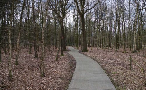 2.3 km – Familiepad Ruinen