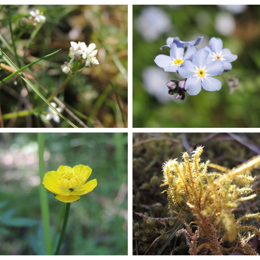Westerhaar-impressie-planten-voetzoekers