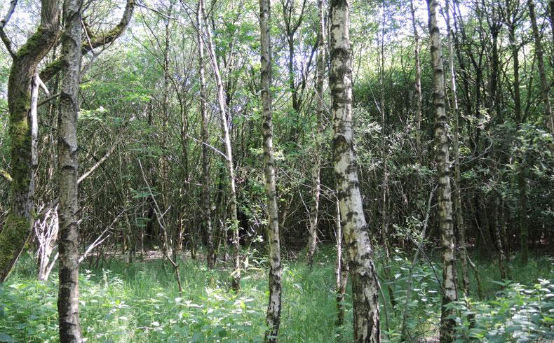 Westerhaar-jong-bos-voetzoekers