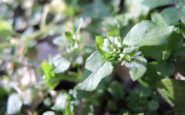 Westerhaar-voetzoekers-bloemen