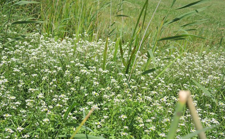 veenweidewandeling-bloemen-voetzoekers