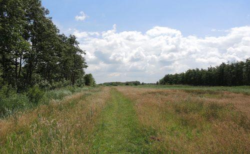2 km – Veenweidewandeling