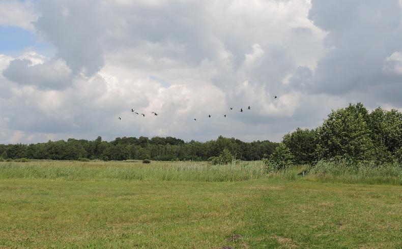 veenweidewandeling-veenweidelandschap-voetzoekers