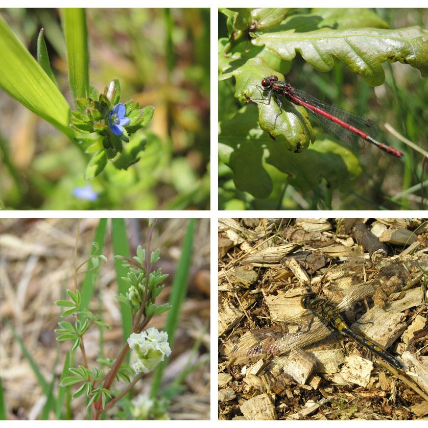 voetzoekers-bargerveen-geel-impressie-planten-en-libellen