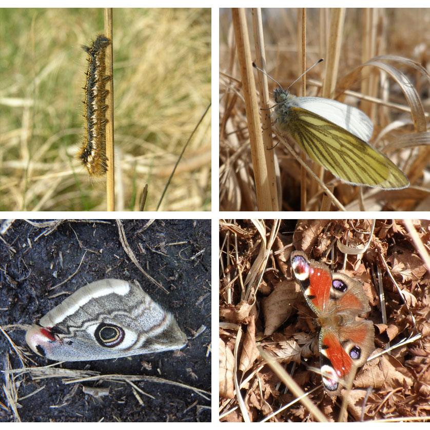 voetzoekers-bargerveen-geel-impressie-vlinders
