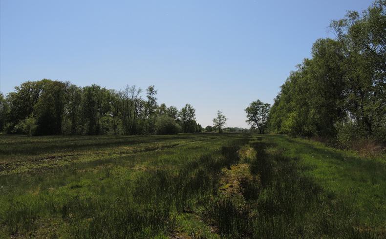 voetzoekers-bargerveen-geel-plasdras