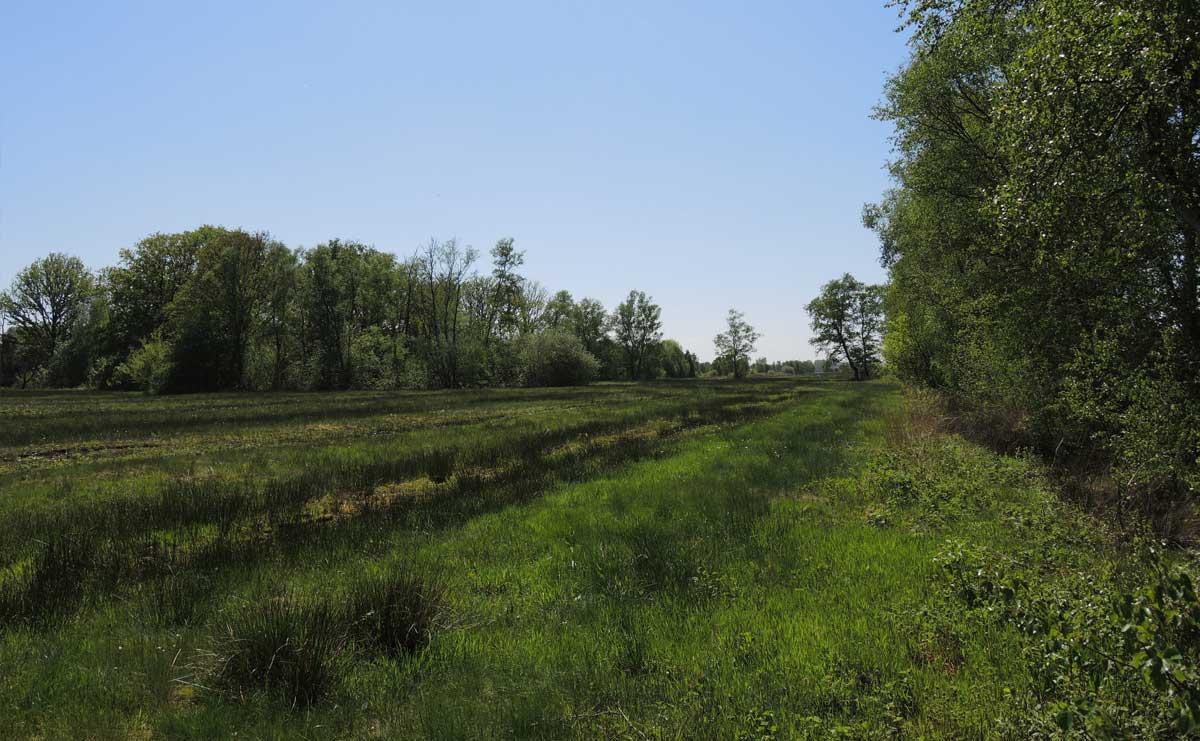 voetzoekers-bargerveen-geel-schoonebekerveld