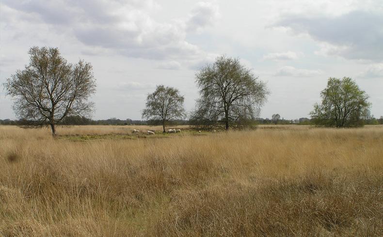 voetzoekers-bargerveen-geel-uitzicht